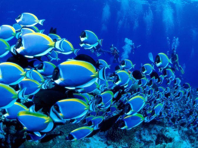 Underwater_Wallpaper_17